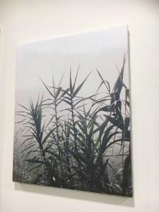 artist-canvas